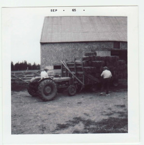 Assorted relatives putting hay into the young cattle barn, 1965. Not the Dark Ages. Not even the High Middle Ages. No, not even the nineteenth century.