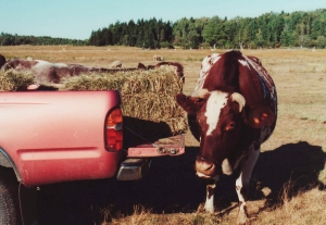 Square-baled hay. There are reasons that pickup trucks came before the baler. Are there pickup trucks in your pre-Industrial-Revolution fantasy world?