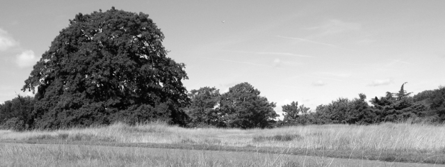 Possibly Anglo-Saxon mounds, Royal Park, Greenwich.