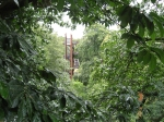 A view of the support towers and stairs of the treetop walkway, framed in the leaves of the European chestnut.