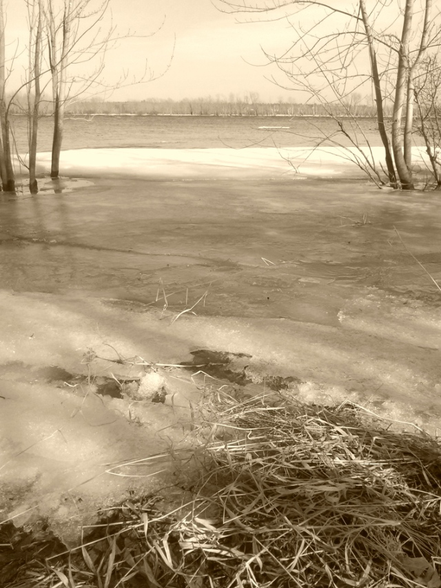 The river, with ice in foreground.